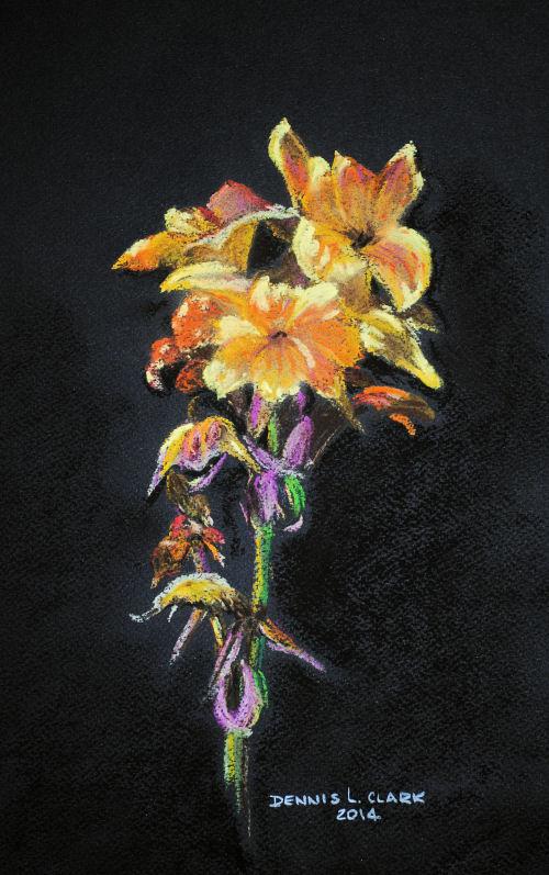 canna flower2